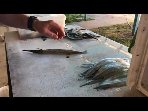 How To Fillet Garfish