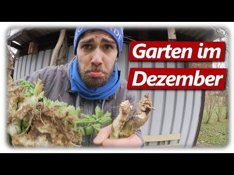 WÜHLMAUS HORROR | Gartenrundgang Dezember 2019