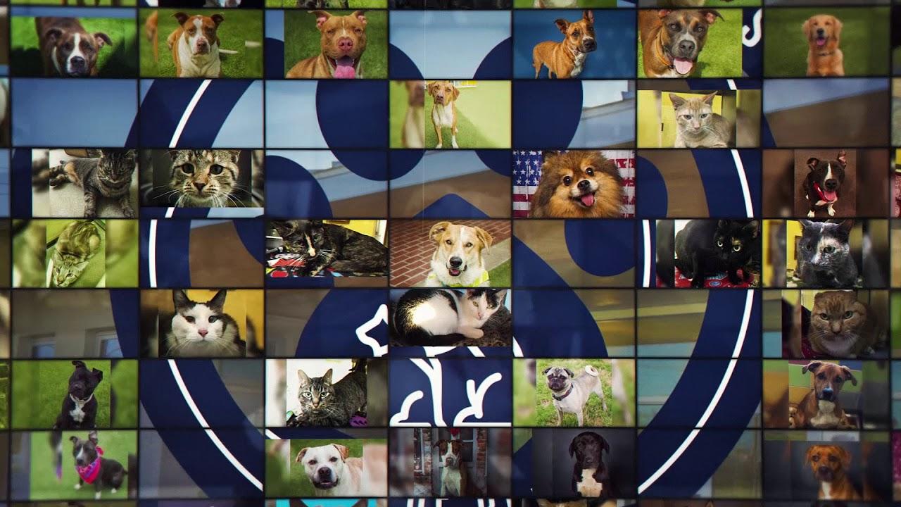 Animal Services | City of Denton