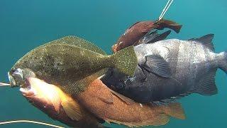 なんだかまともな魚は久しぶりな気がします。メバルと遊んでたらいきな...