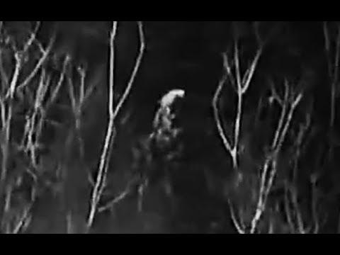 UPDATE - Bigfoot filmed with Les Stroud in Texas - UPDATE
