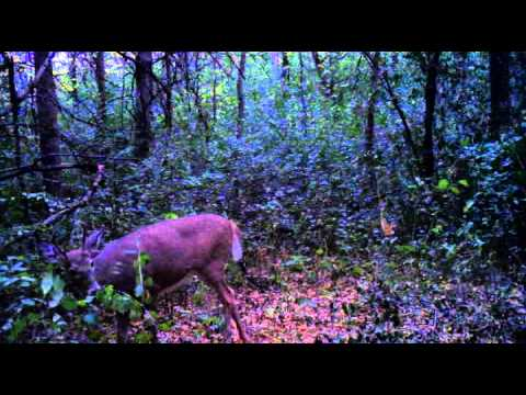 Deer do move when it is windy!