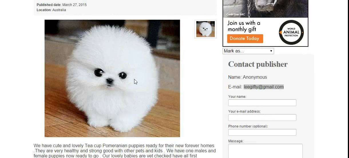 Puppy scams?