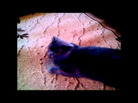 Как узнать что ваша кошка загуляла