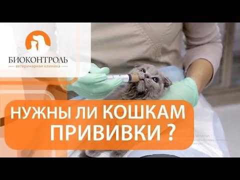 Вакцинация кошек. �� Плюсы и минусы вакцинации для кошек.