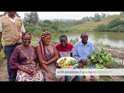 Improving urban food security in Central Africa