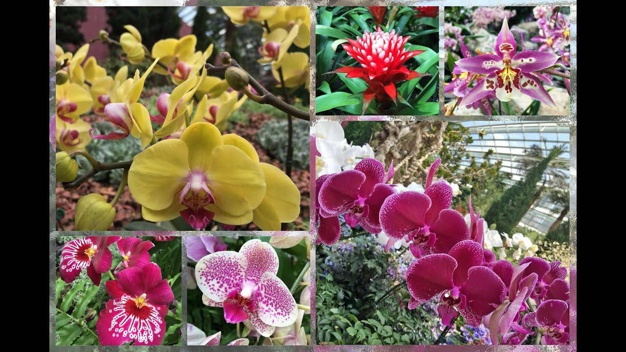8000 orchids flower dome gardens by the bay 2015 aug sep youtube