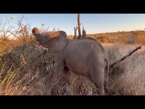A Bush Walk with the Elephants   But Where is Khanyisa?