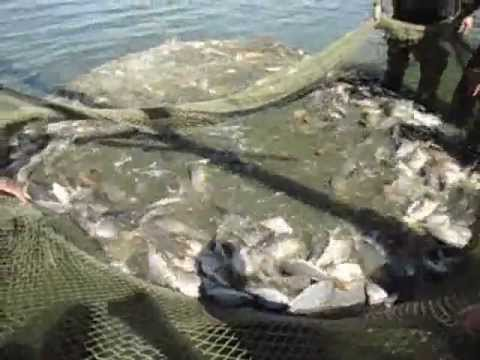 егорьевский рыбхоз ловля форели