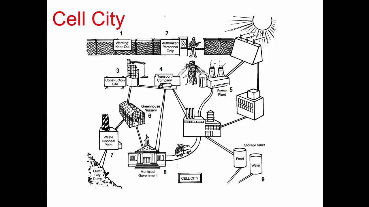 Cell City Diagram Of A Gallery How To Guide Fuelcelldiagramwikimediacommonsgif Images Frompo Download