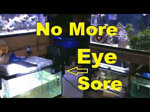 Epic Aquarium Stream! Shutting Down Quarantine Marine/Saltwater Fish Room Live Stream Reef 5.20.2018