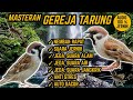 Suara Masteran Gereja Tarung Nembak Rapat Jeda Terapi Air Alam Anti Stres  Mp3 - Mp4 Download
