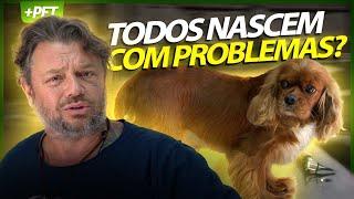 A RAÇA CAVALIER KING NASCE COM SOPRO NO CORAÇÃO! | PT. 3 | CUIDADOS VETERINÁRIOS