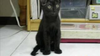 黒猫のタンゴ(MIMI)Black Cat