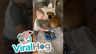 Boy Plays Dog Groomer with Patient Boxer    ViralHog