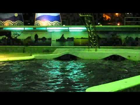 Xiếc cá heo, đảo Tuần Châu, Tp. Hà Long