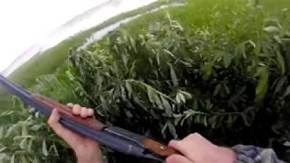 Открытие охоты в Омской области 2017. Охота на утку.