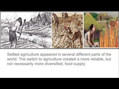 WHAP Ch 1 lecture  -  Neolithic Era pt 1
