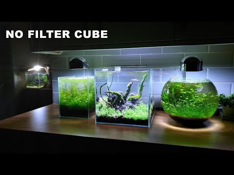 30ᶜᵐ CUBE AQUARIUM: 🔴NO FILTER SETUP🔴