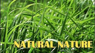 Natural Nature|Estetics Nature|Lil Peep-Натуральная природа|Эстетика Природы|LiL PEEP