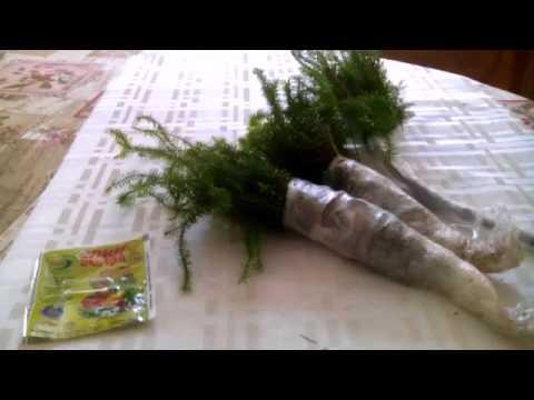Привезенные растения для сада