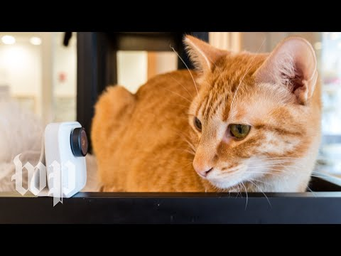 We tested Clips, Google's new artificial intelligence camera, on cats