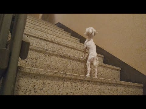 Dog Vlogㅣ계단 처음 올라가보는 강아지 오다남매