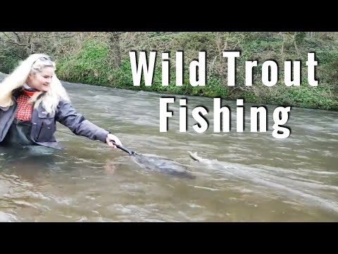 Derbyshire Derwent - Fly Fishing In UK!! Wild River Fishing