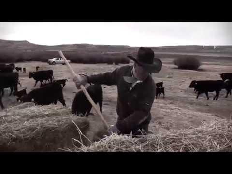 I Am Angus: Berger Ranch, Saratoga, Wyo.