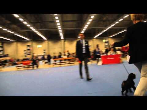 Helsinki Winner 2013 chois BOB