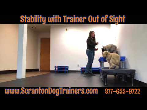 Best Dog Trainers in Scranton ||| Stability with Trainer Out of Sight