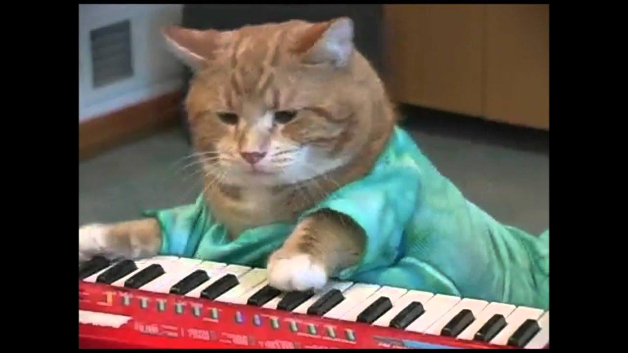 Charlie Schmidt S Keyboard Cat  Hours