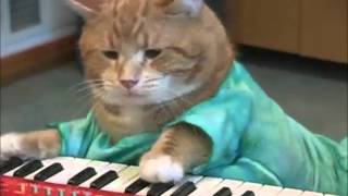 Keyboard cat REINCARNATED 15minutes