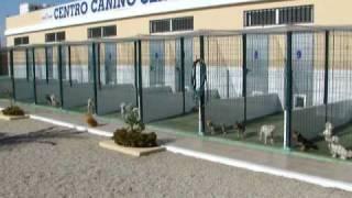 Zona Izquierda De Clan Ferona - Bichon Maltes, Yorkshire Terrier, Westie