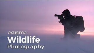 Wildlife Photography Expedition | Behind the scenes in Greenland with photographer Morten Hilmer