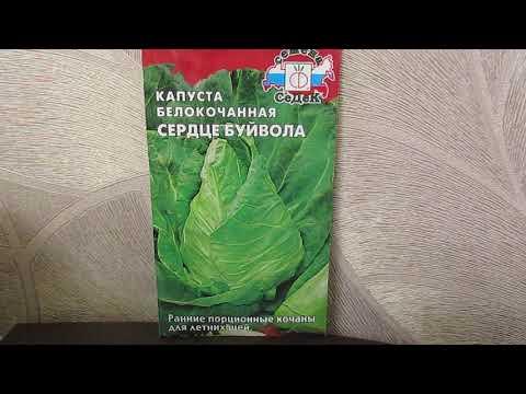 Вопрос: Все ли виды капусты съедобны Какой самый популярный сорт капусты?