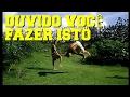 Video de Floresta Azul