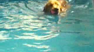 Brownie nadando sob supervisão da Petpuntura na Dogplace no dia 06-05-11