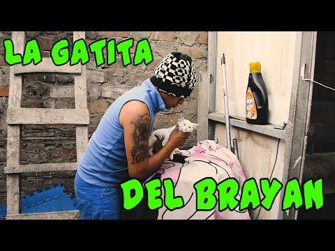 LA GATITA DEL BRAYAN - Loco IORI
