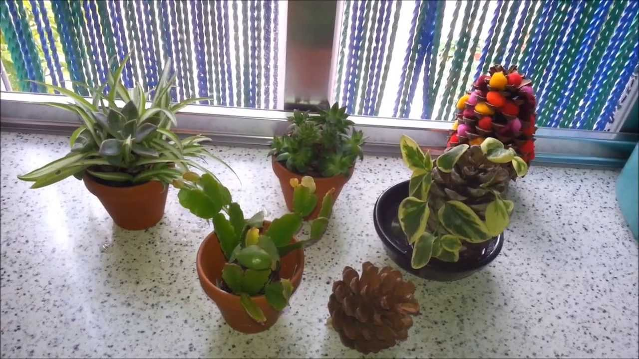 Decorar pi as con plantas youtube - Como decorar pinas para navidad ...