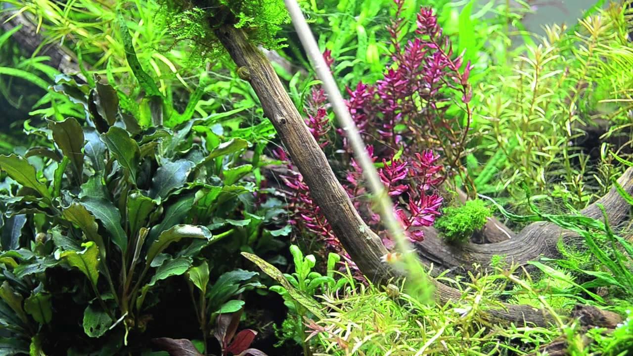alghe filamentose verdi toglierle con un bastoncino