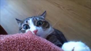 Очень смешные котики 2017 бомба выпуск красивые коты и кошки 2017