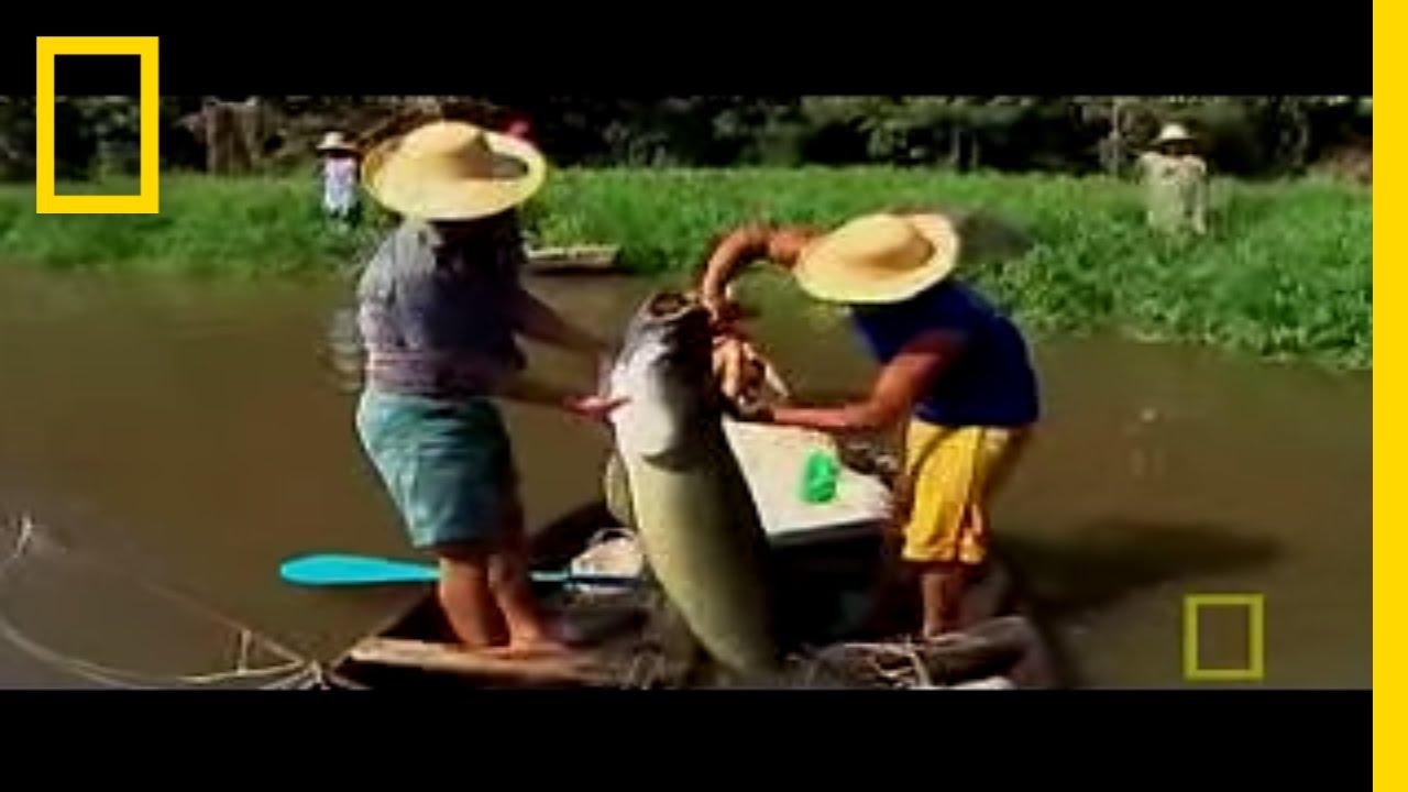endangered freshwater fish