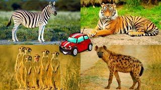 Animals Of Africa For Kids To Learn. Животные Африки на английском - голоса и звуки