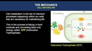 Video BCR Presentation 2 Mechanics Cell Metabolism download MP3, 3GP, MP4, WEBM, AVI, FLV Juli 2018