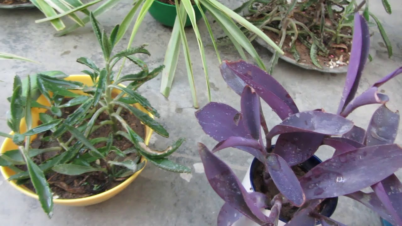 Small Pot Gardening Ideas To Grow