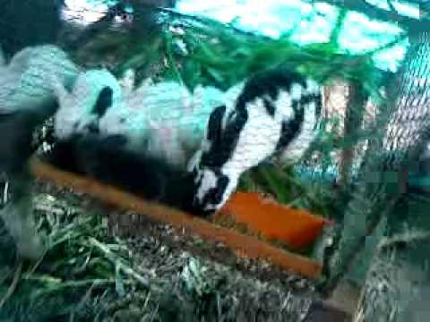 Criadero de conejos puente nal colombia youtube for Criaderos de pescados colombia