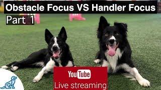 Dog Agility Training - Obstacle Focus VS Handler Focus