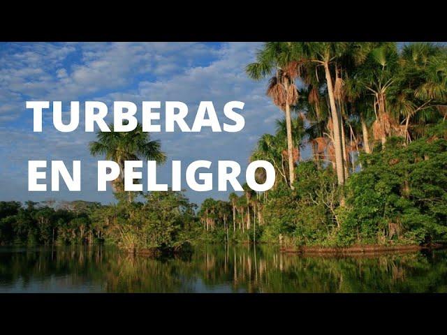 Hidrovía Amazónica, turberas en peligro