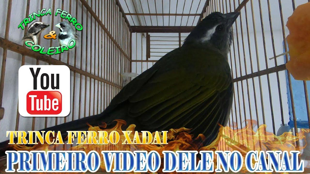 NOVO TRINCA DO CANAL XADAI DOBRADOR 7 NOTAS